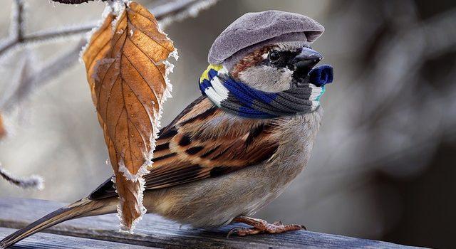 Bildbearbeitung, Spatz mit Mütze